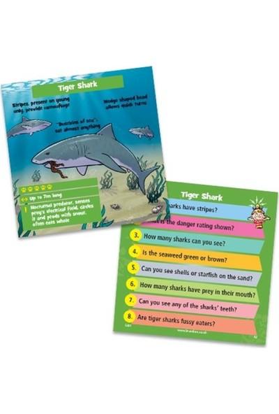 Brainbox Brainbox Yırtıcı Hayvanlar (Predators) +8 Zeka Oyunu