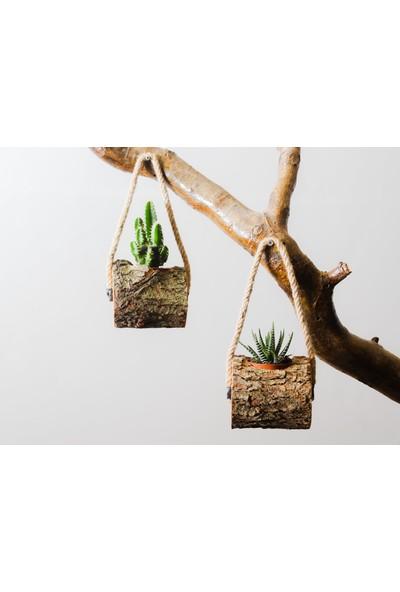Elit Concept Mini Kaktüs Saksı 2'li Doğal Kütük
