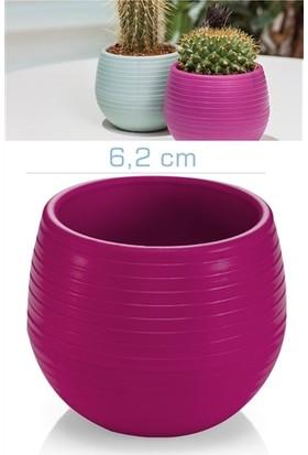 HomeCare Kaktüs Saksı Mini Vişne Renk 422207