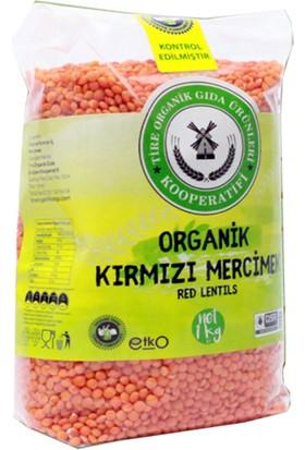 Tire Organik Kooperatifi Organik Kırmızı Mercimek 1 kg