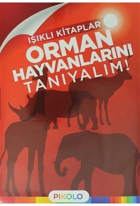 Orman Hayvanlarını Tanıyalım! - Işıklı Kitaplar