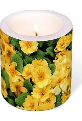 Yellow Prime Roses Mum