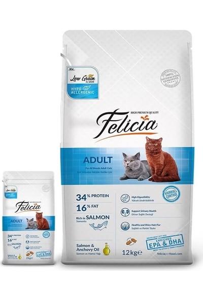 Felicia 12 kg Somonlu Yetişkin Kedi Maması + 2 Kg Hediyeli