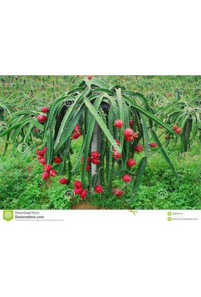 Pitahaya,Yerli Üretim 300 gr Pitaya, Ejder meyvesi, Gazipaşa, Macar