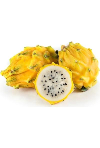 Berke Fidancılık Sarı Pitaya Ejder Meyvesi Fidanı (Koleksiyon Ürünü)