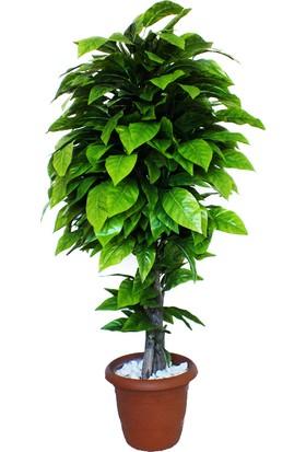 Dekoral Kestane Yapay Ağaç 150 cm