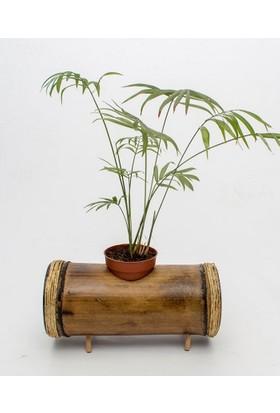 Bambu Doğal Tekli Yatay Bambu Saksı Naturel Saksılık