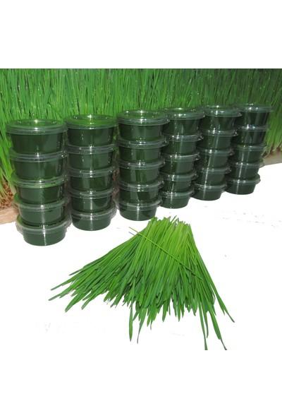 Smootox Buğday Çimi Suyu (30 Adet)