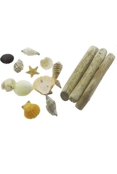 Mutlu Adım Karışık Deniz Kabukları Dekor Seti