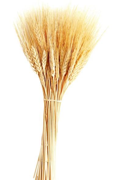 Tahtakale Toptancısı Kuru Çiçek Doğal Başak Buğday Başağı 45 cm 1 Demet