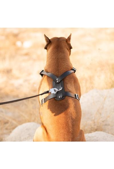 Ac Leather Deri Köpek Göğüs Tasması