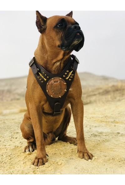Ac Leather Deri Köpek Tasması Set