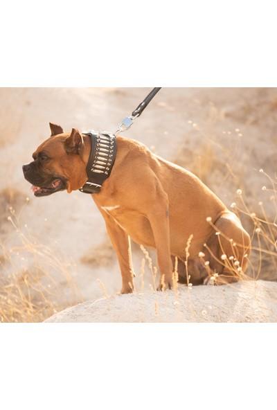 Ac Eather Deri Köpek Boyun Tasması - Sevk Kayışı