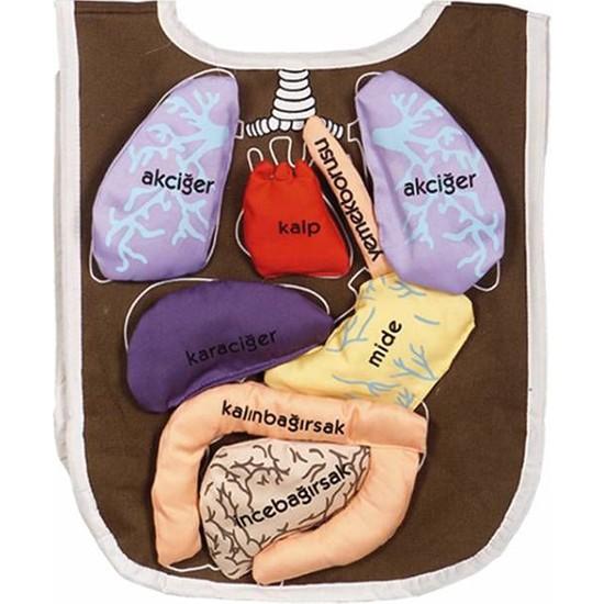 Yabidur Eğitici Oyuncak Organ Önlüğü