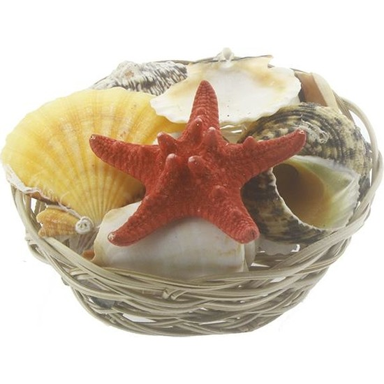 Mutlu Adım Karışık Deniz Kabukları Dekor Seti Sepette