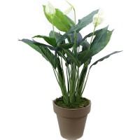 Dekorsende Yapay Spatifilyum Çiçeği