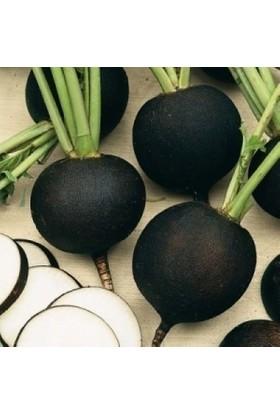 Arzuman Siyah İnci Turp Tohumu - 500 G Teneke