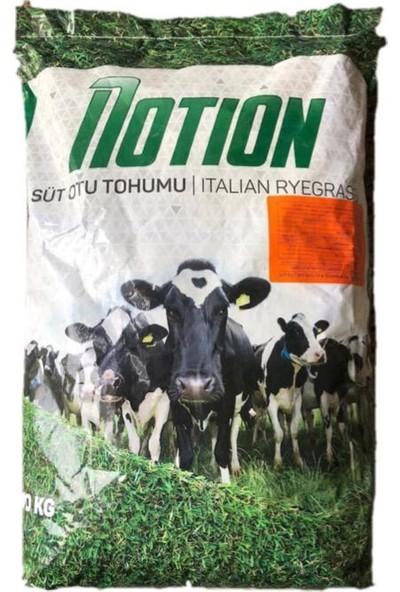 Notion Ryegrass Tohum Süt Otu Tohumu 10 Kg