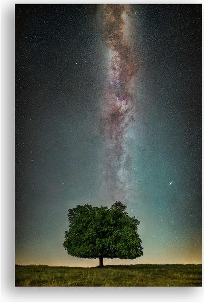 Diji Kanvas Ağaç ve Samanyolu Manzara Kanvas Tablo