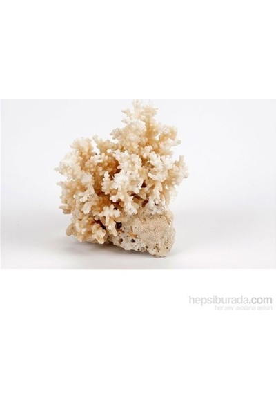 Woddy Akvaryum İçin Beyaz Mercan 250-300 gr