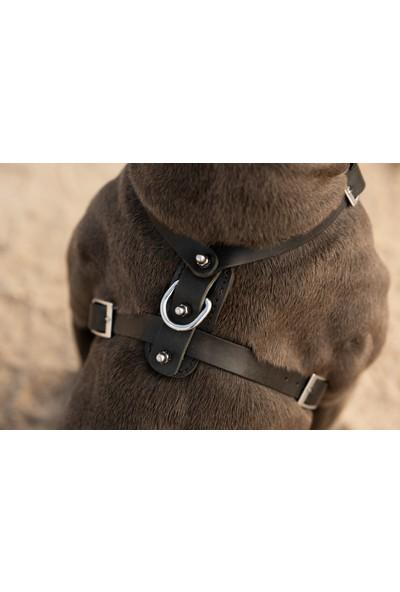 Ac Leather Orta Boy Köpek Göğüs Tasması