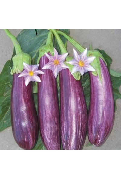 Evve Bahce Alacalı Çizgili Patlıcan Tohumu (100 Tohum)