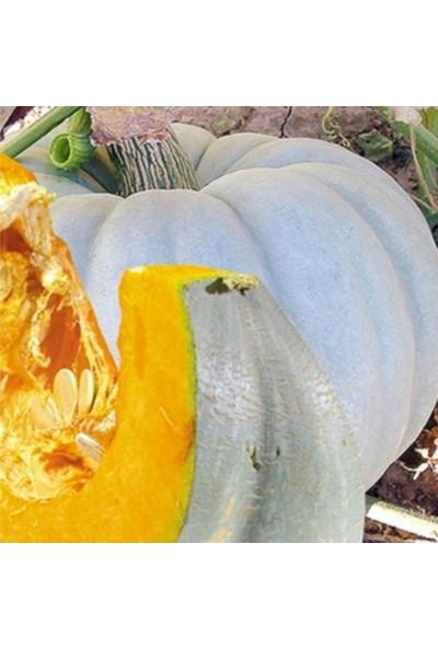 Evve Bahce Tatlılık Reçellik Bal Kabağı Tohumu (10 Tohum)