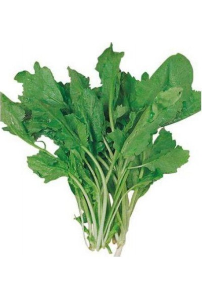 Evve Bahce Toros Yeşili Geniş Yaprak Tere Tohumu (100 Tohum)
