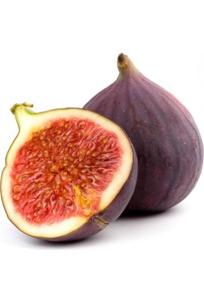 Evve Bahce Tüplü İri Meyveli Dürdane Bursa Siyahı İncir Fidanı