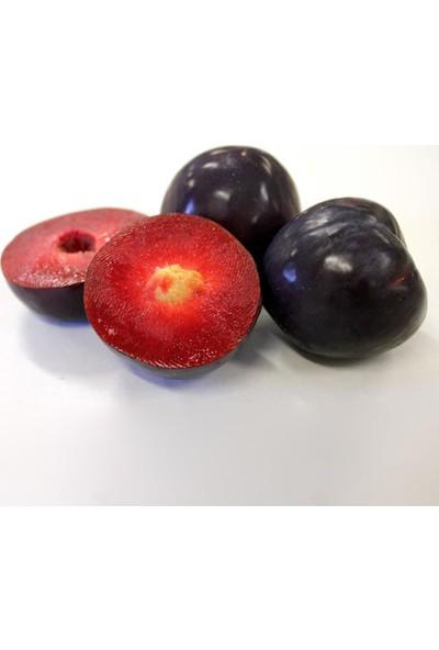 Evve Bahce Tüplü İçi Kırmızı İri Meyveli Black Splendor Japon Erik Fidanı