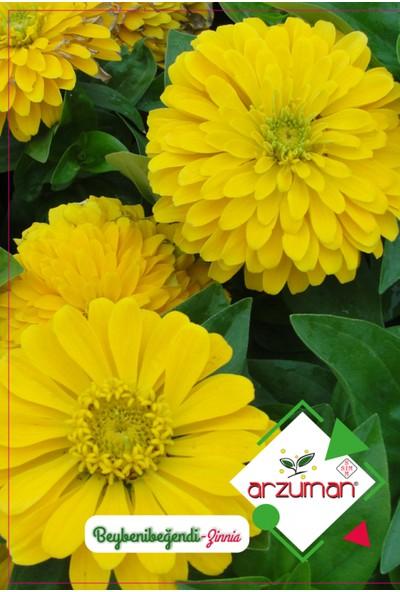 Arzuman Beybenibeğendi Çiçeği 30 Tohum