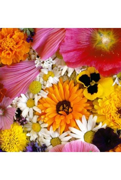 Arzuman Karışık Çiçekler 50 Tohum
