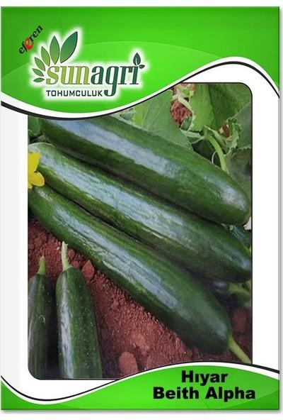 Sunagri Beith Alpha Salatalık Tohumu (10 Gr.)