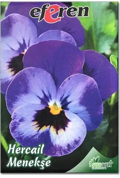 Sunagri Hercai Menekşe Çiçek Tohumu