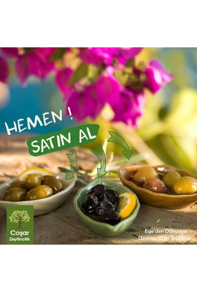 Coşar Zeytin291-320 (Süper) 5 kg Siyah Yağlı Sele