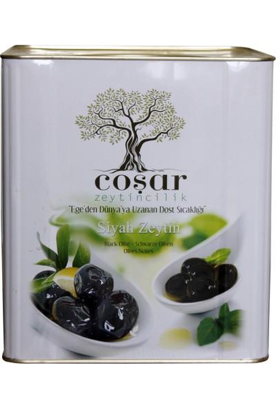 Coşar Zeytin 321-350 (Hususi) 5 kg Siyah Yağlı Sele
