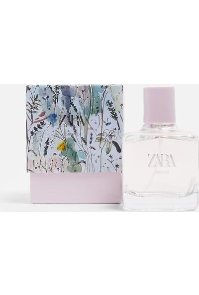 Zara Orchid Edp 100 ml