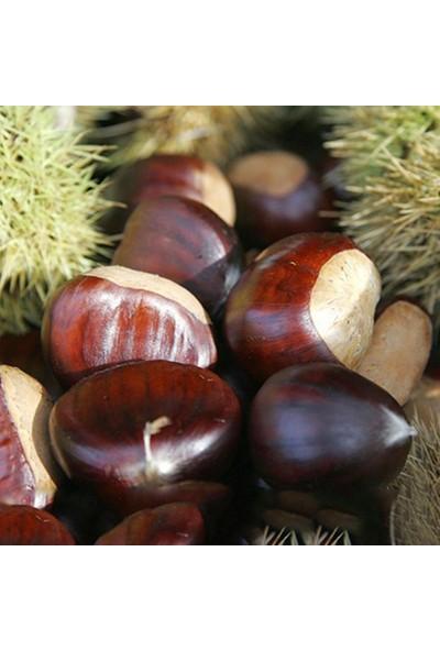 Köymarket 10 Adet Marigoule Kestane Fidanı