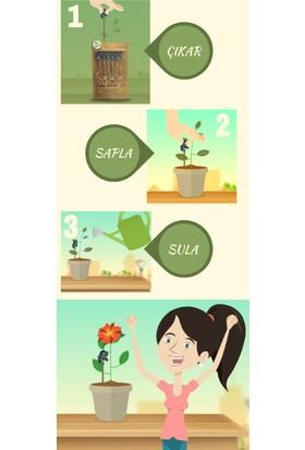 Green Zebra Biostick Root Grow Bitki Besini
