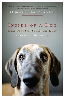 Inside Of A Dog: What Dogs See Smell And Know