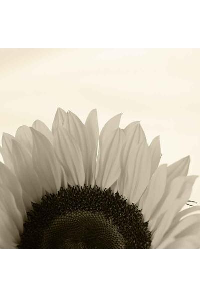 Vizyon Sanat Makro Çekim Beyaz Çiçek