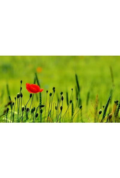 Vizyon Sanat Kırmızı Çiçek