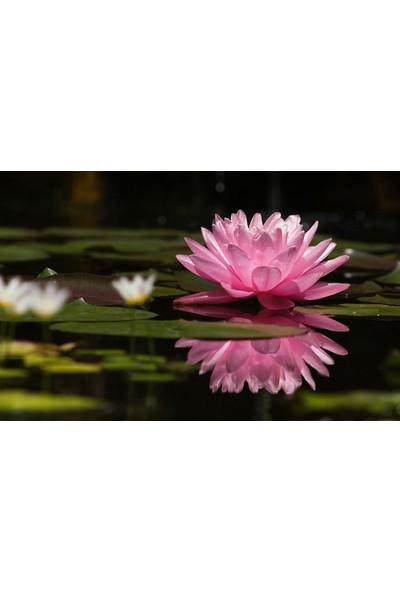 Vizyon Sanat Pembe Çiçeğin Suya Yansıması