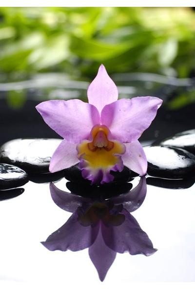 Vizyon Sanat Spa Taşları Ve Orkide Vıı