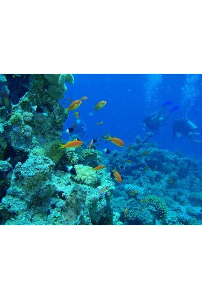 Vizyon Sanat Denizde Balıklar