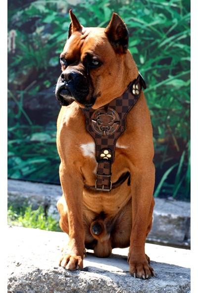 Ac Leather Köpek Göğüs Tasması Kahverengi