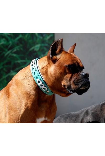 Ac Leather Köpek Boyun Tasması Yeşil