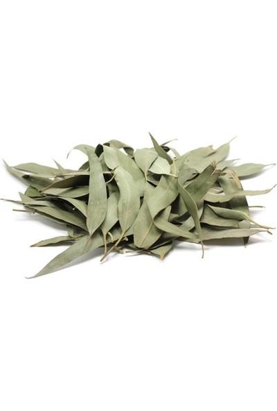 Atasagun Şifa Okaliptüs Yaprağı 100 gr