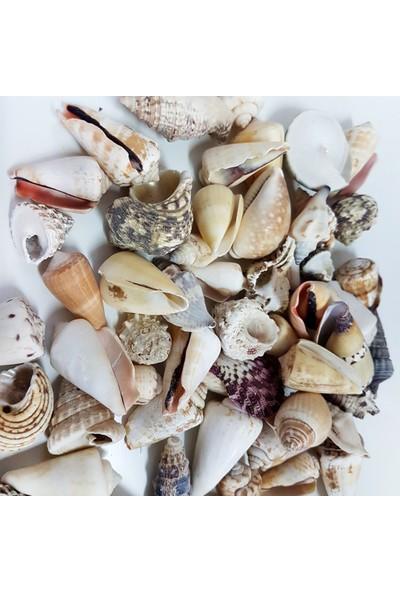 Tahtakale Toptancısı Mi x Ed Shells Büyük Kiloluk Deniz Kabuğu 1 Kg