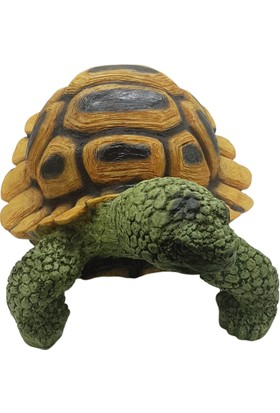 Nazar Antalya Kaplumbağa Büyük